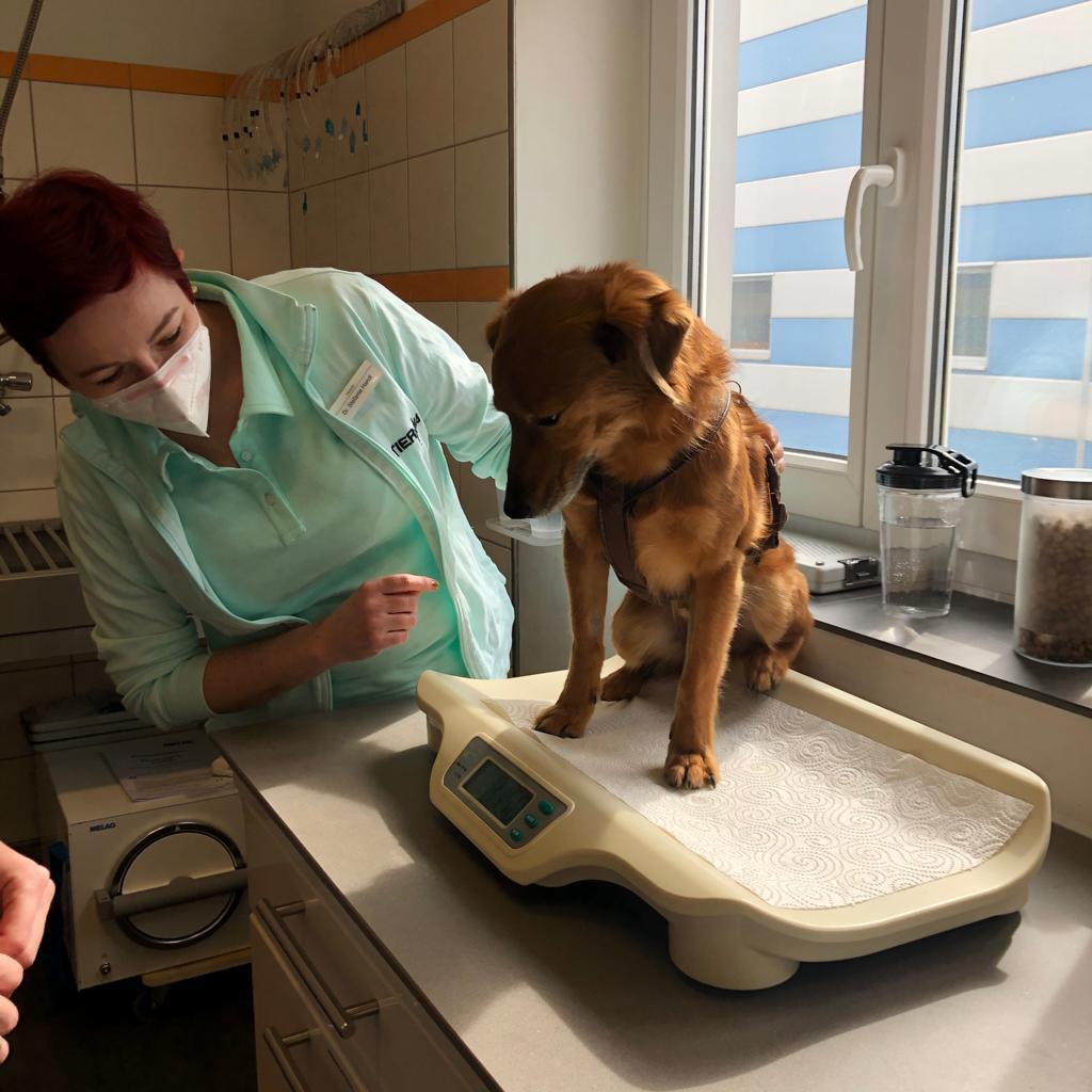 Dr. Stefanie Handl wiegt einen Hund